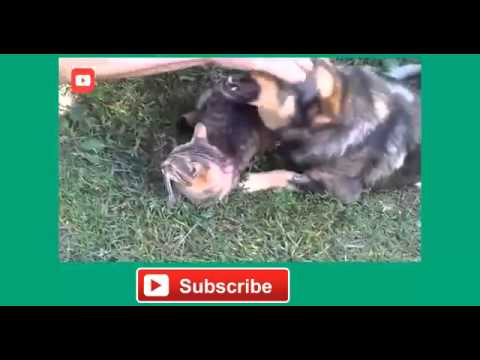 Cute Cats and Dogs Feeling Jealeous Compilation 1