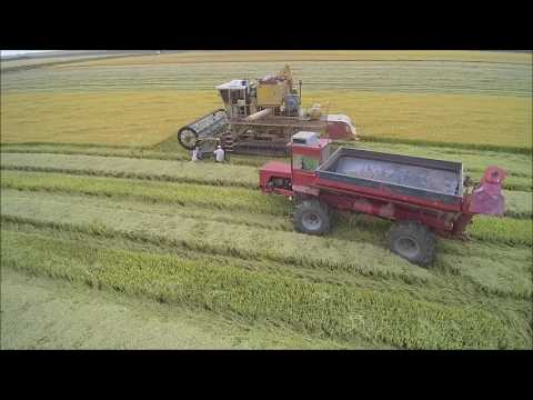Hardy 2016 California Organic Rice Harvest