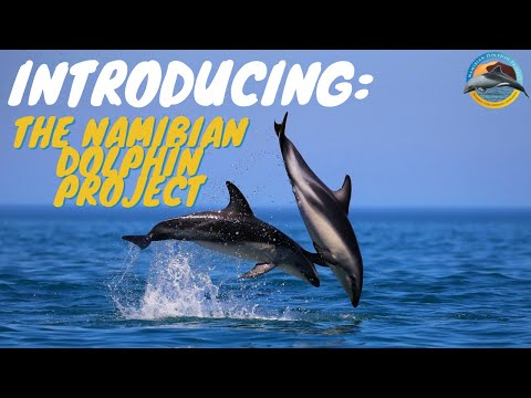Help the Namibian Dolphin Project to protect and conserve th
