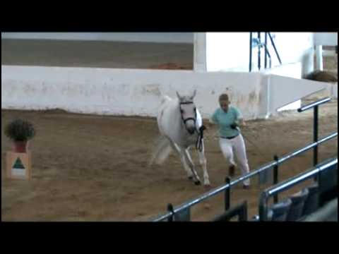 2009 Sport Horse National Championships at the Kentucky Horse Park: Mimi Stanley Feature