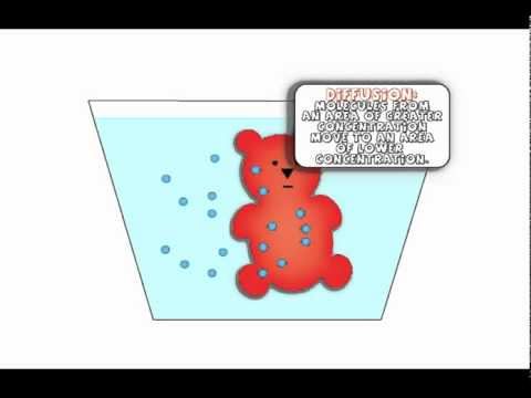 gummy bear osmosis lab report Write a lab report on your findings  (students may use the lab report template in  the equilibrium unit task on  questions to consider: gummy bear osmosis.