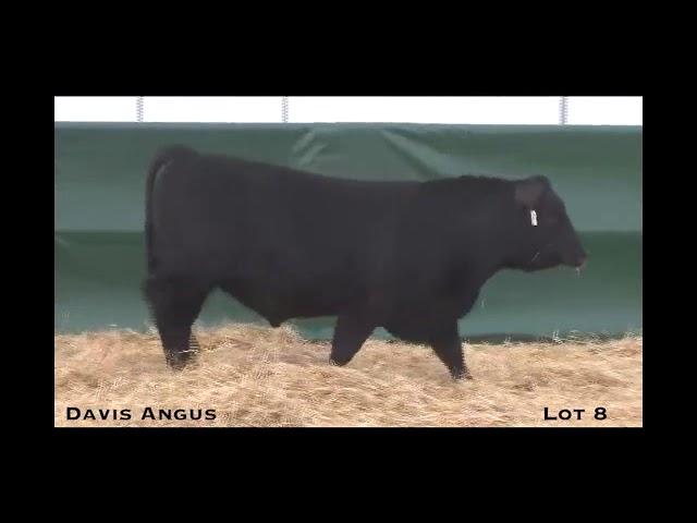 Davis Angus Lot 8