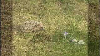 Релакс. Природа весной.