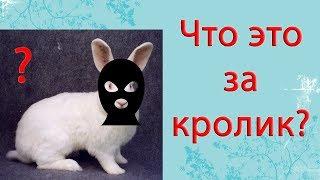 Новая порода кроликов. ЕвроФерма