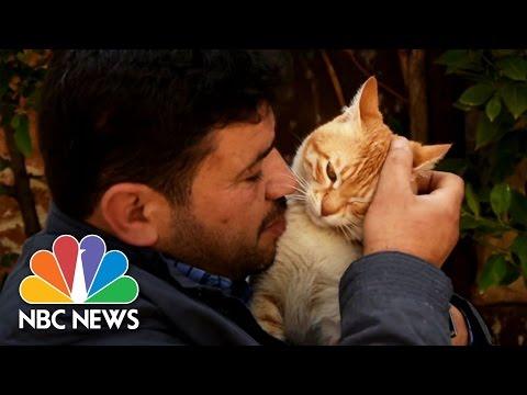 'Cat Man Of Aleppo' Rebuilds Sanctuary For Abandoned Pets | NBC News
