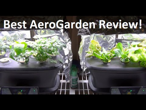 BEST AeroGarden Review - 3 Months!  From Setup To Fruit!