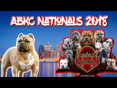 Throwback to ABKC Nationals 2018 | American Bully Kennel