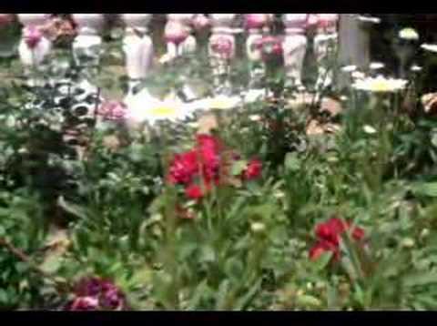 Floradas na Serra