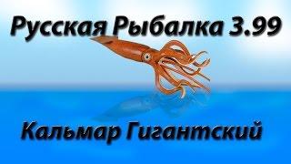 Кальмар Гигантский