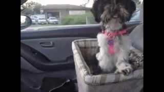 Сумка для перевозки животных в автомобиле