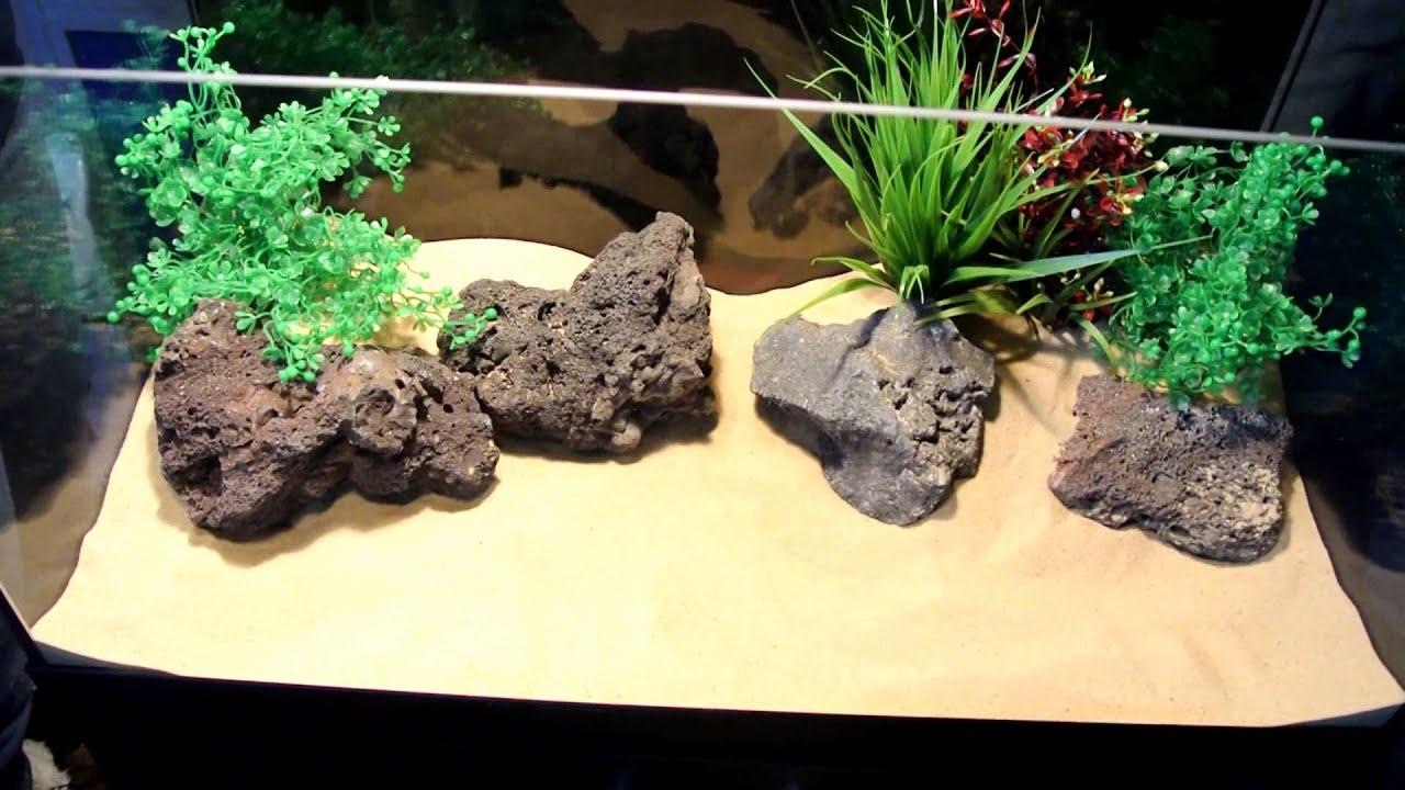 Fish for natural aquarium - How To Set Up A Tropical Fish Tank Aquarium Gold Fish Cichlids Freah Water Plants Natural Look