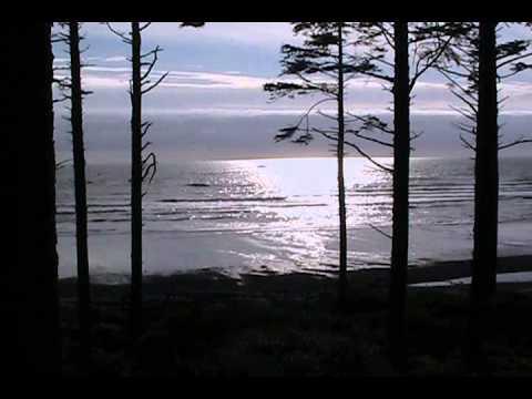 Ruby Beach Trees Silhouetting Silver Surf
