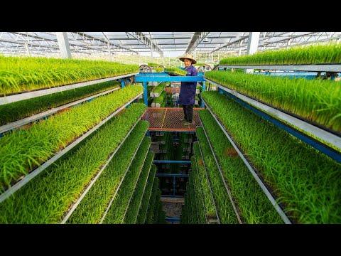 直播:科技赋能中国农村农业