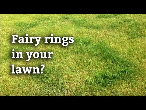 Fairy Ring Disease   Spring-Green Lawn Care Guide