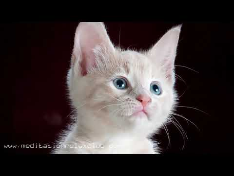 Household Music: Soothing & Relaxing Nature Sounds for Dogs, Cats, Kittens & Puppies