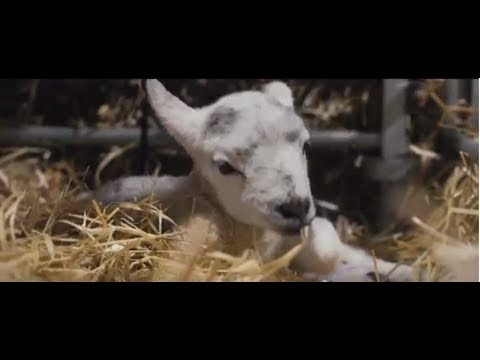 Lambing Live and More at Rand Farm Park