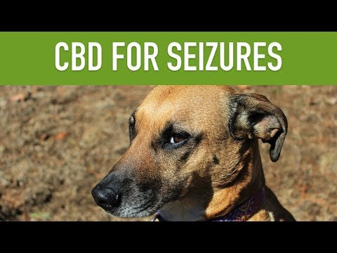 cbd-for-dogs-with-seizures---can-cbd-treat-epilepsy-in-pets?
