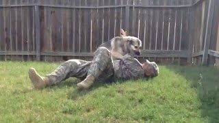 Dogs Welcoming Soldiers Home 2016 [NEW]