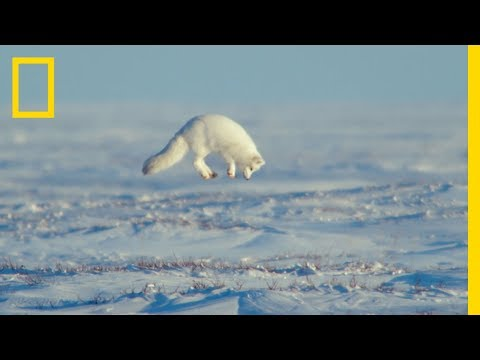 The Unsung Heroes Of The Arctic - Ep. 3 | Wildlife: The Big Freeze