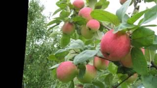 видео Лечение яблонь и обрезка плодовых деревьев недорого