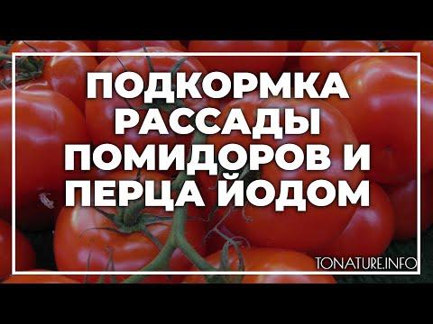 Подкормка рассады помидоров и перца йодом   toNature.Info