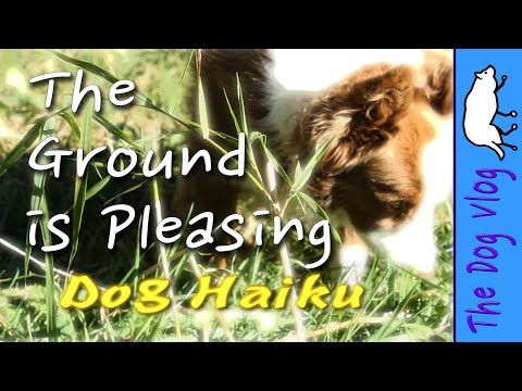 Dog Haiku -The Ground is Pleasing. Poetry by Border Collies