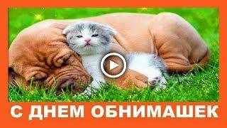 С днем обнимашек ✿ Прикольное видео поздравление
