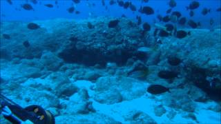 spearfishing oahu june august 2012 for mobile