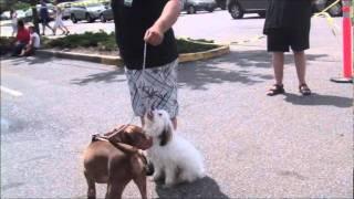 Long Island Dog Training Tibetan Terrier Training