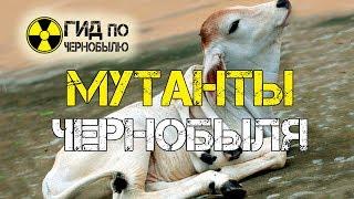 Мутанты Чернобыля - жуткое видео мутаций у животных в Припяти