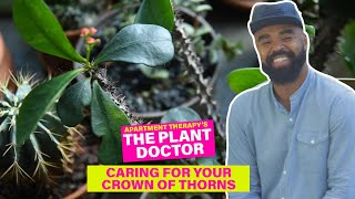 Caring For Your Crown of Thorns | The Plant Doctor | Apartment Therapy