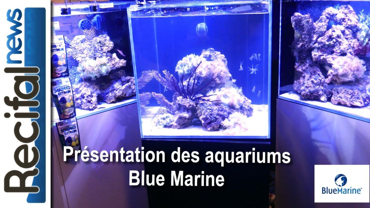 Blue Marine Aquarium