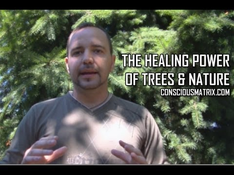 The Healing Power of Trees & Nature