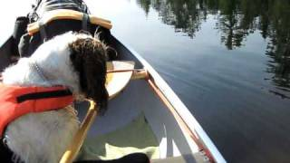 Solo canoe layout with a dog