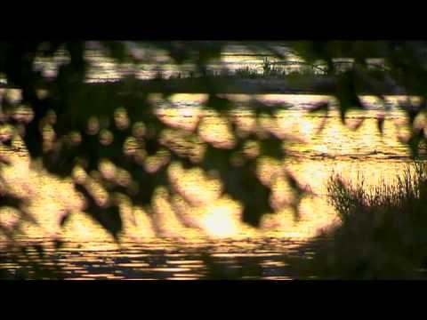 The Natural Environment at Sacred Heart Medical Center at RiverBend
