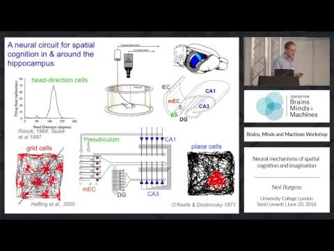 Neural Mechanisms of Spatial Cognition and Imagination