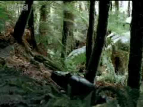 Giant crocodiles - Walking with Dinosaurs - BBC