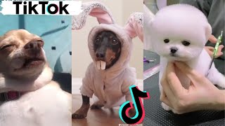 Funny Dogs of TIKTOK Compilation ~ Cute Little Puppies