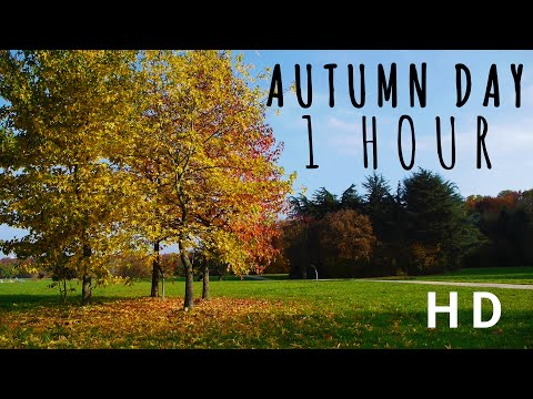 A BEAUTIFUL AUTUMN DAY I Relaxing Breeze and Rustling Leaves in Germany I 1 HOUR 2017 (HD)