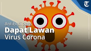 Edukasi - Benarkah Antibodi Sars Dapat Melawan Virus Corona?