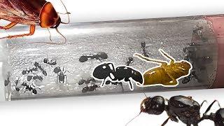 ТАК ПРОЛЕТАЕТ ЖИЗНЬ! Насыщенный день муравьев ЖНЕЦОВ!!! 30 часов за 10 минут!