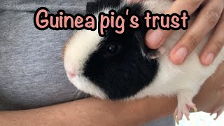 6 tips to get your guinea pig to trust you