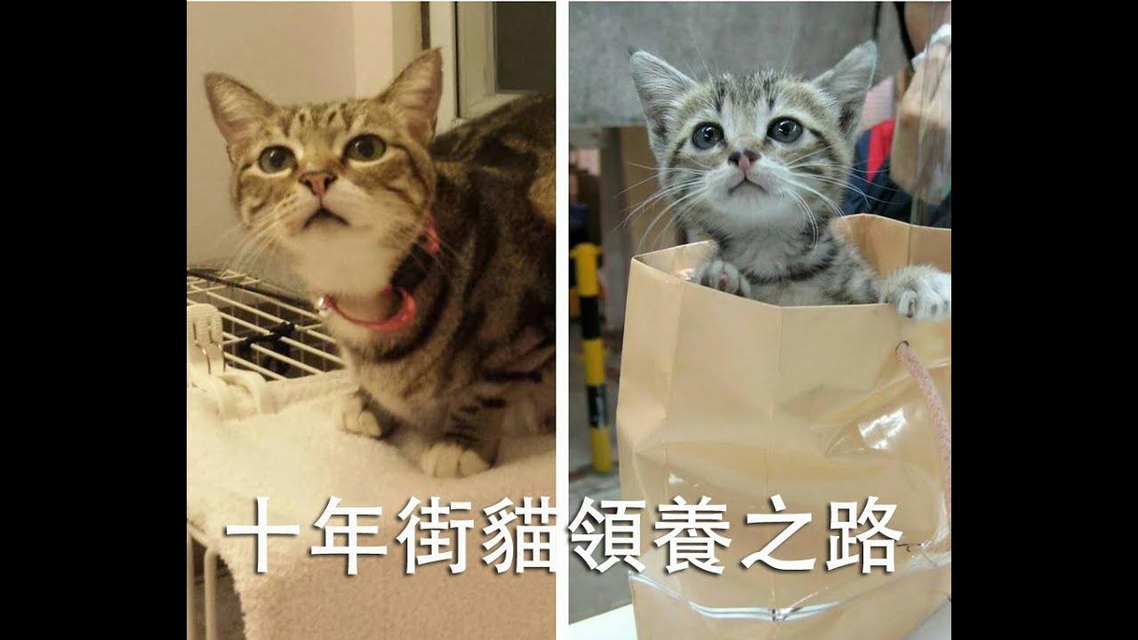 十年街貓領養之路 - YouTube