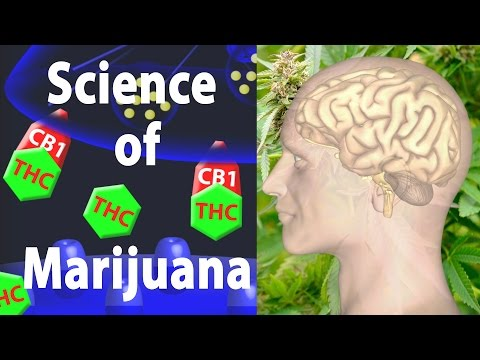 Marijuana Effects on the Brain, the Goods and the Bads, Animation.