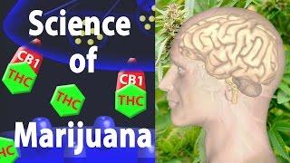 Marihuana Auswirkungen auf das Gehirn, die Waren und die Schlechten, die, Animation.