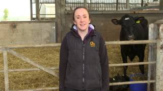 Calf house hygiene - brought to you by AHDB Dairy
