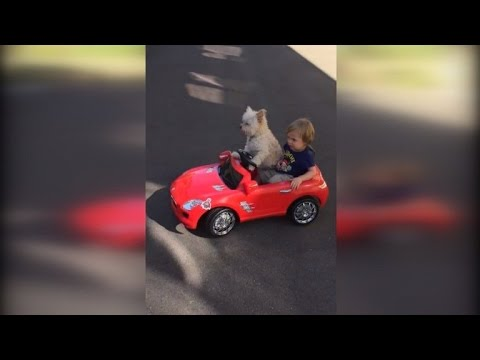 Dog Drives Little Boy Around in a Convertible Toy