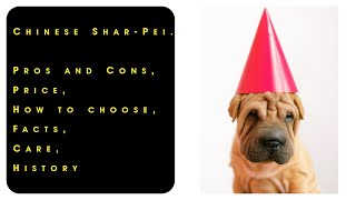 Chinese Shar Pei. Pros and Cons, Price, How to choose, Facts, Care, History