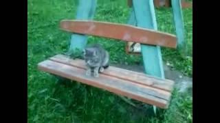 Котику отрезали хвост :(