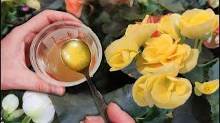 1 Чайная ложка под любой цветок и пышное цветение вас будет радовать долго. Рецепт подкормки.